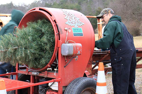 Christmas Tree Bailing at Clouse's Pine Hill Tree Farm