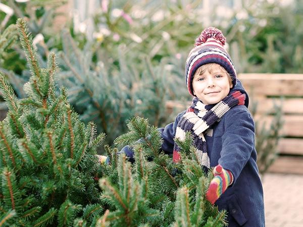 Precut Christmas Trees Winchester, VA